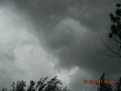 formation of  a  tornado in forrest