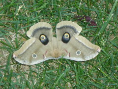 Awesome Moth