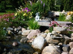 koi pond and backyard garden