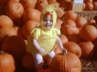 LIttle Lilly on a pile of pumpkins