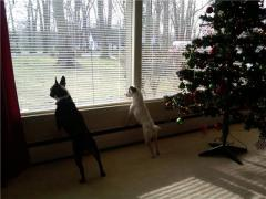 Our two dogs on squirrel patrol