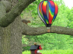 Lets go for a balloon ride.