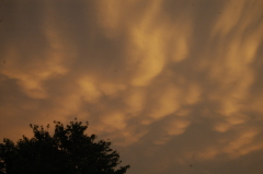 Mammatus Clouds over Morton