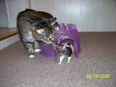 Cat Meets Rat