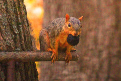 Squirrel Has A Mouth Full!