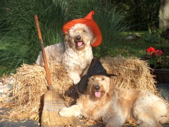 Libby and Remy are Bewitching!