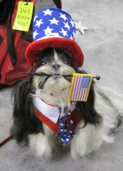 Happy July 4th from one of the Tzu kids