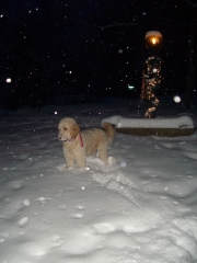 Jackson on the fresh snow