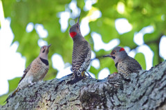 WoodPecker Family Meeting