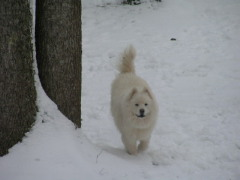 Snowball in the Snow