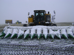 Snow on the Cob!  Harvest Time in Iowa!