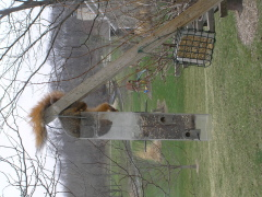 Hungry Squirrel Gets Stuck!
