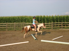 Breaking a three year old mare!