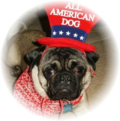 All American Pugsly on the 4th