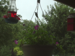 humming bird setting