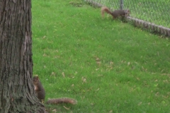 Hide and Seek squirrels