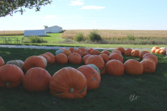 Pumpkins on the Prairie