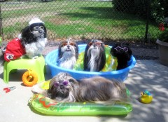 Tzu kids cooling off