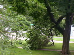 Storm damage in Peoria County