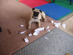 The dog DID eat my homework!!!