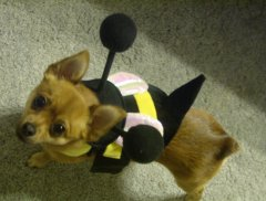 Izzy the Bumble Bee!