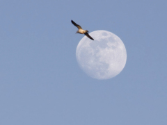 Rising Moon, Chautauqua Wildlife Refuge
