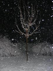 Nightime Snow