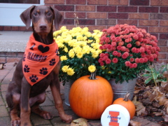 Indy the Illini Fan