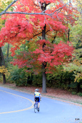 Autumn Bicycle Riding on Grandview