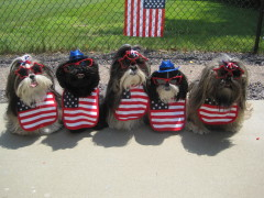 Tzu kids say Happy July 4th!