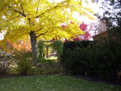 A fall day in the garden.