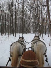Winter Wonder in a horse drawn sleigh