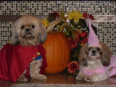 Super Dog TED and his Princess CHUBBLES