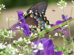 Beautiful summer butterfly