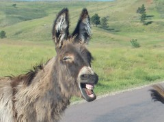 UNUSUAL DONKEY