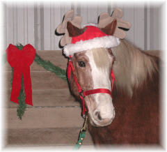 Horses love Christmas too!