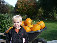 Bountiful Pumpkin Harvest