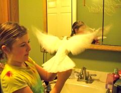 Mighty Bird -vs- Mirror
