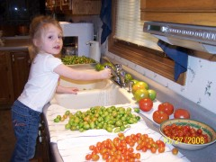 Little Tomato Picker
