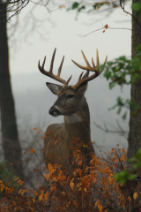 High Point Buck