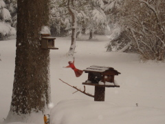 Cardinal in Flight on a snowy day